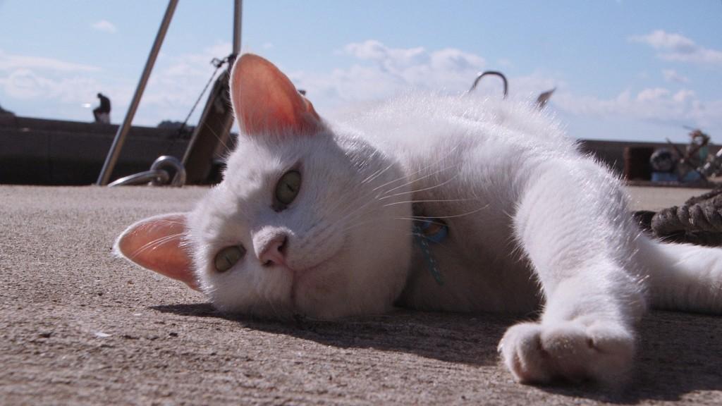 本作の重要登場猫、シロ(c) Laboratory X, Inc.