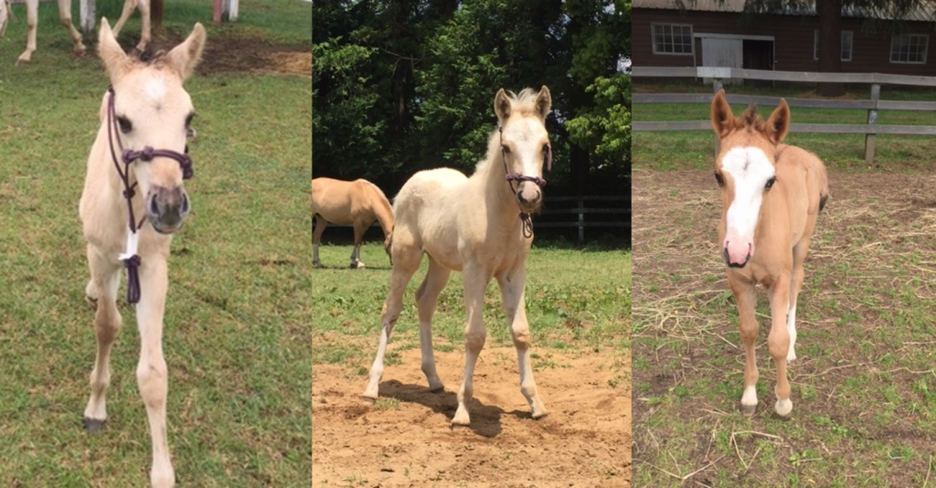 生まれた子馬たち(写真は農学生命科学研究科附属牧場提供)
